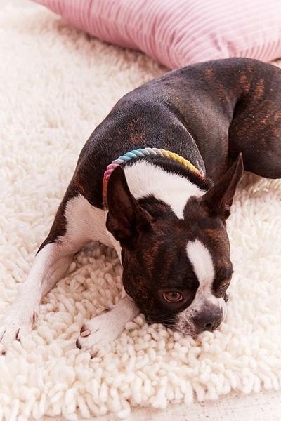 Found My Animal Rainbow Ombre Collar