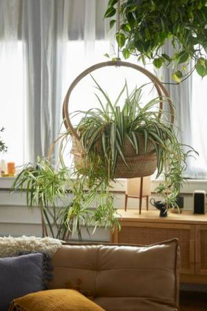 Margot Rattan Hanging Planter